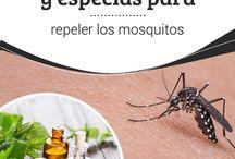 11 hierbas para repeler mosquitos