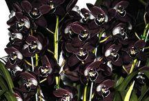 #orchids #орхидеи