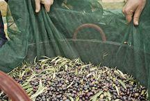 Oliverium Blog - Alles zum Thema Olivenöl / In unserem Blog findet Ihr Information zu Olivenöl nativ extra, in Sachen Gesundheit, sowie viele andere Themen