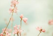 bloom / by Bekah White