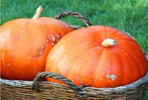 Family Travel fall / our favorite family travel writers tell where you find the best pumpkin patches, apple picking and leaf peaping.