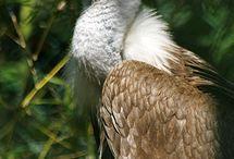 Vultures rule