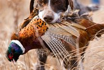 Hunting Photos We Like