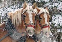 Angels horses