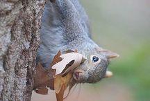 Squirrel circus!