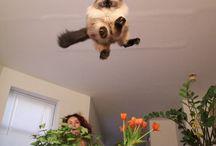 mačičky;-)