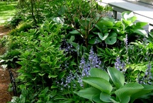 Gardening-Landscaping Ideas / by Judy Green