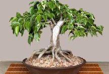 Увлекательный бонсай,флорариум,мини-сад
