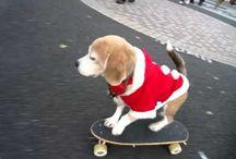 Beagle videók