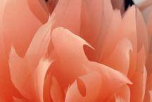 Flores Luisa Gala