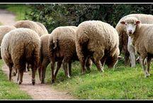 PAphotografy - 8 - FarmVille / Animais da quinta  Animal Farm- farmville