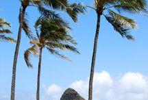 Hawaii.. where I want to live / by Jaime Buzzard