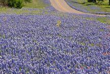 Texas / by LynDee Walker