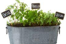 Herb Garden Ideas / by Brittany Hall