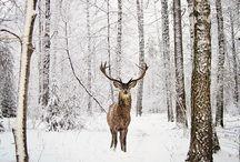 Oh deer / Herten