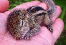 Esquilinhos