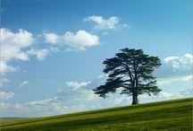 Trees ❤️
