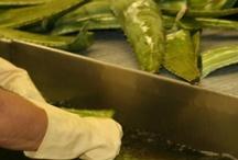 Från planta till produkt / Forever har lång erfarenhet att ta hand om färsk Aloe vera och förädla den till produkter som uppskattas världen över. Våra odlingar finns i Texas, Mexico och Dominikanska Republiken. Som världens största producent av Aloe vera är det självklart för oss att värna om miljön. Vi odlar därför ekologiskt och med växelbruk.