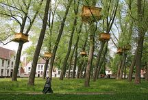 Trees in Bruges