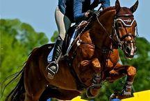 Val de Loir-Imoo / 2002 Stallion by Ahorn x Jus de Pomme x Zeus KWPN Foal book Semen owned by Equi Sport, LLC