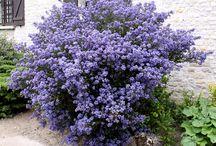 fleurs plantes