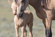 Hugable Horses!