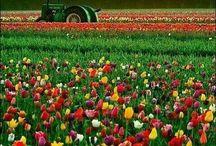 Flowers / by Jane Bishop