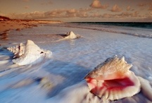 To the Sea, To the Sea / All things associated with my love of the oceans; especially shells and beach glass.