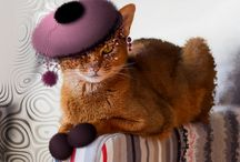 Animals in Hats / Animals in Hats..Fashion collection 2016