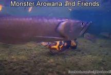 Underwater Fish Videos