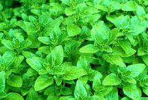 Liečivé rastliny / o liečivých rastlinách