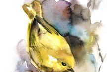 birds ilustration