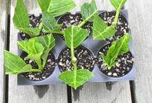 Tuin / Tuinideeën en tips voor plantverzorging.