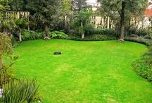 jardin cesped