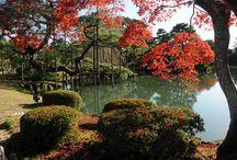 Japan: de mooiste herfstkleuren / In november kleuren de Japanse esdoorns van geel tot rood met alle tinten daartussen. Natuurlijk speelt een gedeelte van de reis zich af in en rond Kyoto, de historische stad bij uitstek. Eén van de redenen: alleen al in deze stad bevinden zich duizenden tempels! Wij kozen hier de mooiste tempeltuinen uit, die u tijdens dit bezoek gaat bekijken. Andere tuinen bevinden zich in en rond de hoofdstad Tokyo. Hier staan onder meer de beroemde Imperial gardens op het programma.