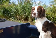 Pets friendly boating holidays