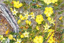 Tasmanian wildlife and natural history art / Images by Tasmanian Artist Mel Hills. Visit www.melhillswildart.com.au for more.