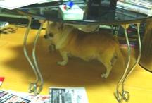 My small watch dog