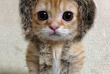 Kitties&Puppies