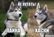 Собаки и щенята