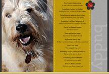 It's a dog's life! / by Pamela Archer
