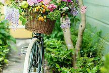 велосипед и цветы