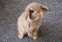 Rabbit n_n