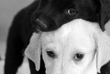 Black and white / Puppy