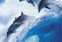море дельфины пальмы