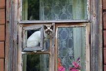 Kissat ikkunalla, Cat window