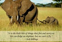 Ode to the Elephant / Inspiring quotes and phrases dedicated to these beautiful creatures.