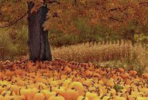Fall lovin'  / by Krystal Godfrey Workman