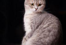 Animales :)