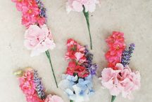Flowers, Flowers, Flowers!